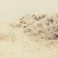Beach VII