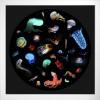Bioluminescence framed